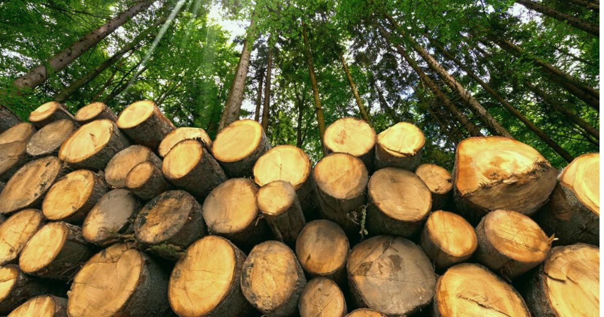 Market Outlook - Lumber & Access Matting