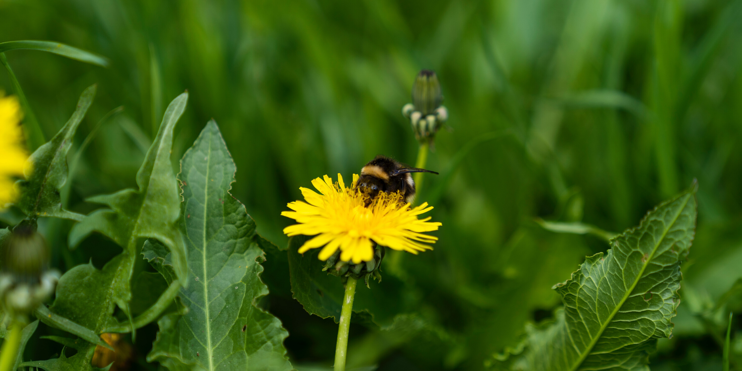 Pollinators are crucial to maintaining biodiversity